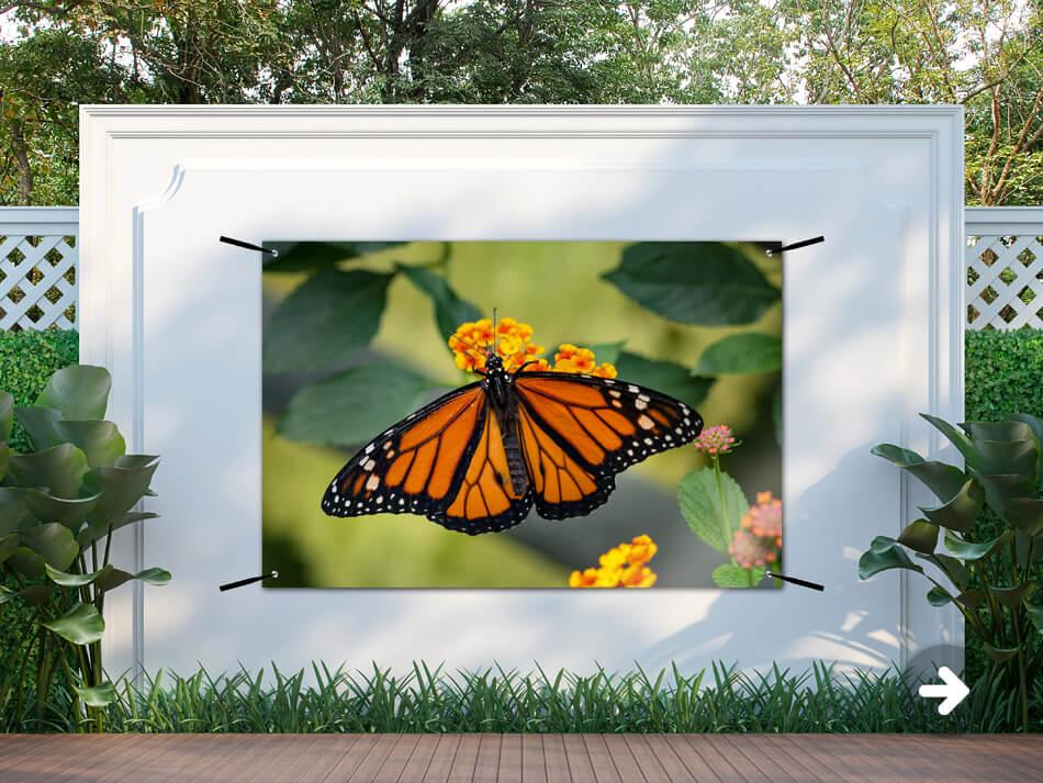 Gartenposter Schmetterling