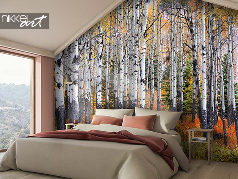 Fototapeten Viele Espenbäume in einem Wald während der Herbstzeit