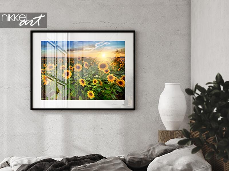 Bilder mit Rahmen mit Sonnenblume