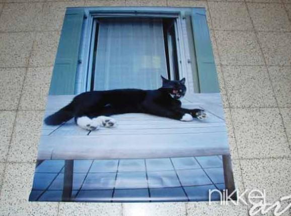 Foto auf Gartenposter Katze