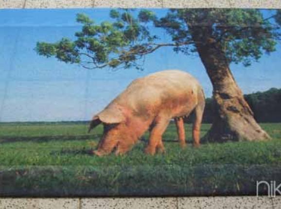 Foto auf Gartenposter Schwein
