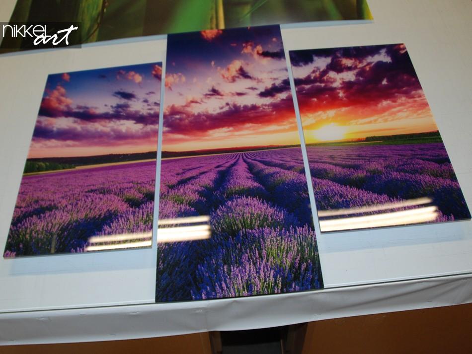 Foto auf Leinwand Lavendel