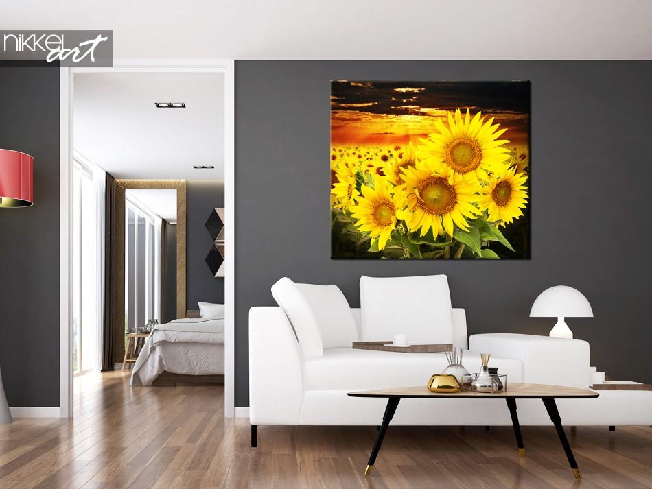 Foto auf Leinwand Schöne Sonnenblumenfeld bei Sonnenuntergang
