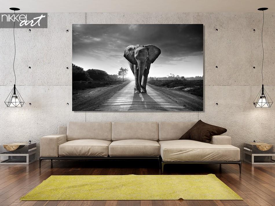 Foto sur Acrylglas, Elefant, Schwarzweiss