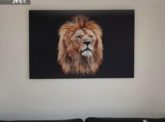 Foto auf Alu-Dibond von einem Löwen