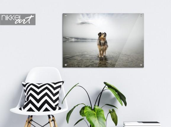 Foto  der Hund auf Glas
