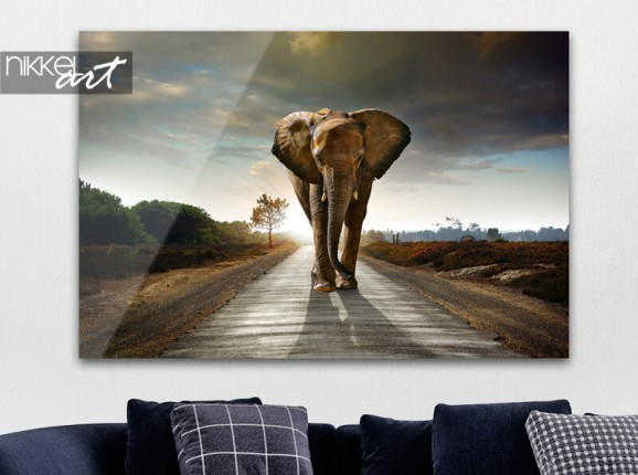 Elefant auf Acrylglas