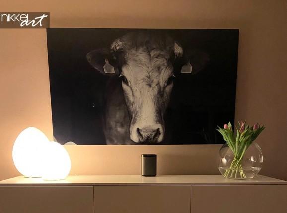 Foto auf Acrylglas Kuh