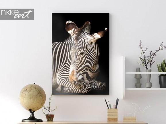 Zebra auf Alu-Dibond