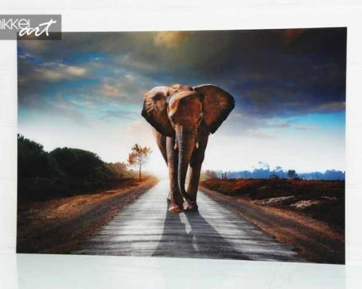 foto auf alu dibond elefant. Black Bedroom Furniture Sets. Home Design Ideas